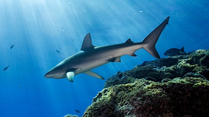 Watch Lost Sharks Of Easter Island Online