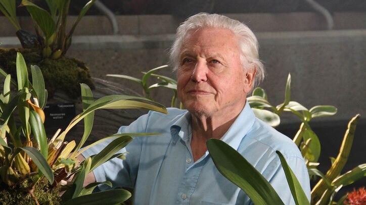 Watch David Attenborough's Kingdom Of... Online