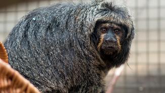 Monkey Life image