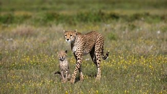 Cheetah: Fatal Instinct image