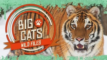 Big Cats: Wild Files