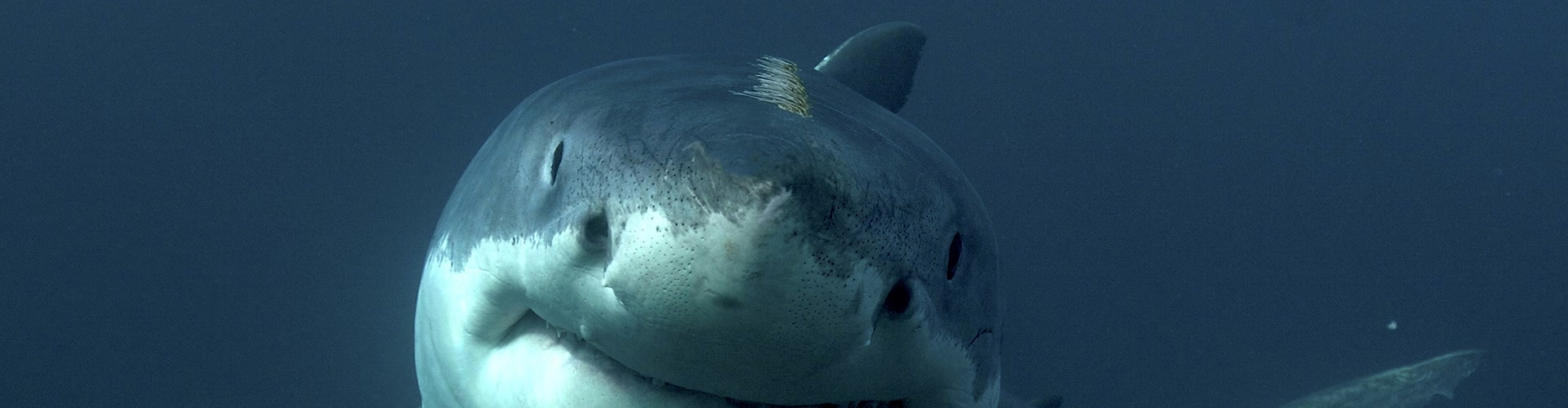 Watch Great White Serial Killer Lives Online