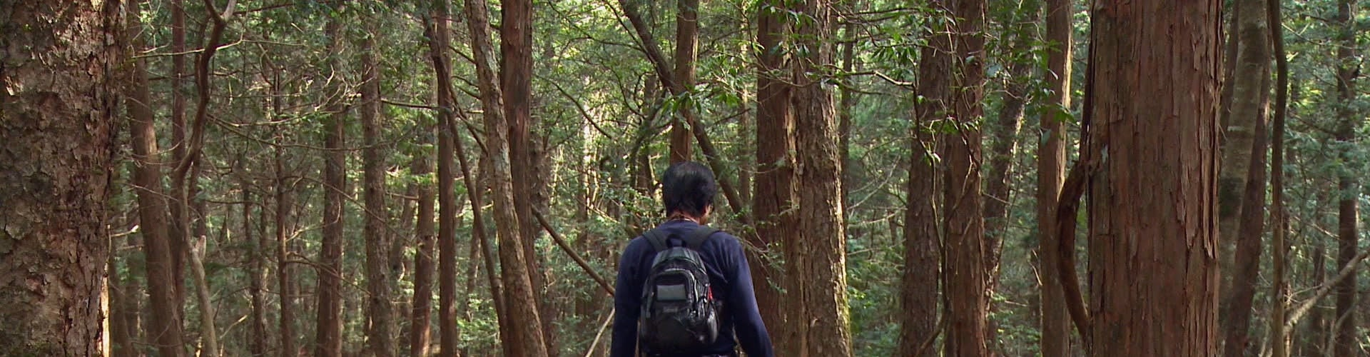 Watch Aokigahara Suicide Forest Online