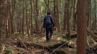 Aokigahara Suicide Forest image