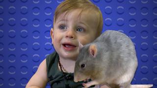 Baby Vs. Rat