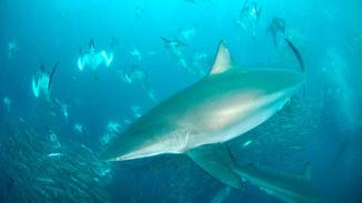 Shark Alley image