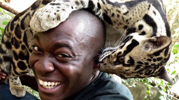 Watch Big Cats... Online