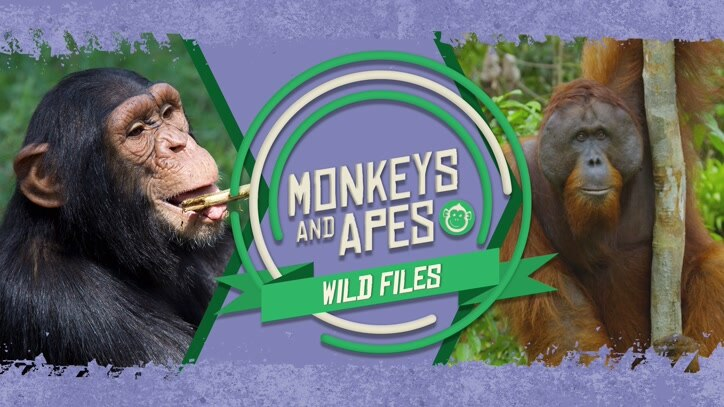 Watch Monkeys And Apes: Wild Files Online
