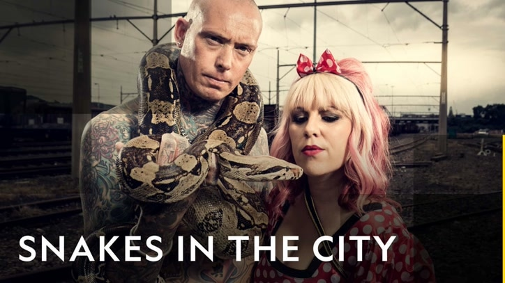 Watch Snakes In The City Online