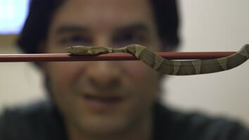 Getting High Injecting Snake Venom