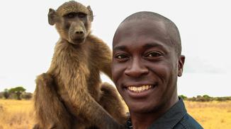 Monkeys: An Amazing Animal.. image