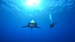 Deadliest Shark