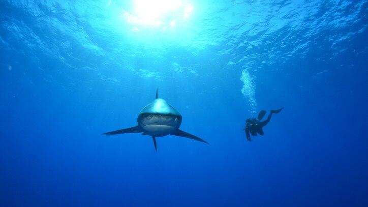 Watch Deadliest Shark Online