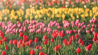 Spring Scenes image
