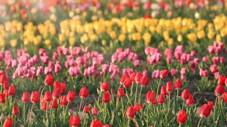Watch Spring Scenes Online