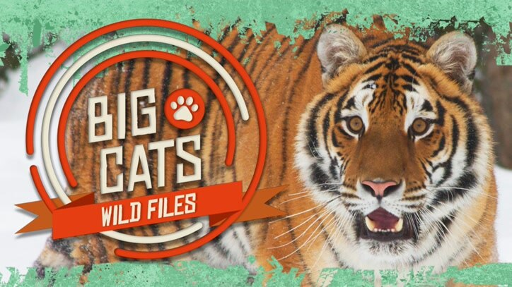 Watch Big Cats: Wild Files Online