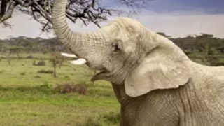 5 Facts...About Elephants That Will Blow