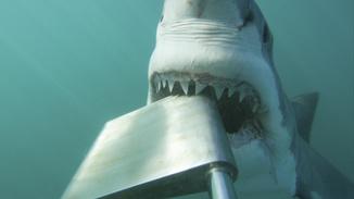 Shark Alley: Legend of Dynamite image