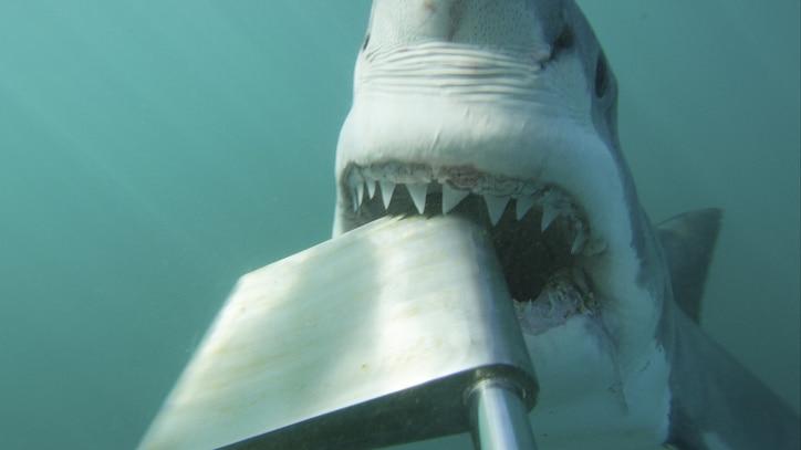 Watch Shark Alley: Legend of Dynamite Online