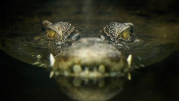 Lair Of The Killer Crocs