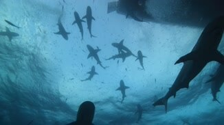 Tiger Shark Beach image