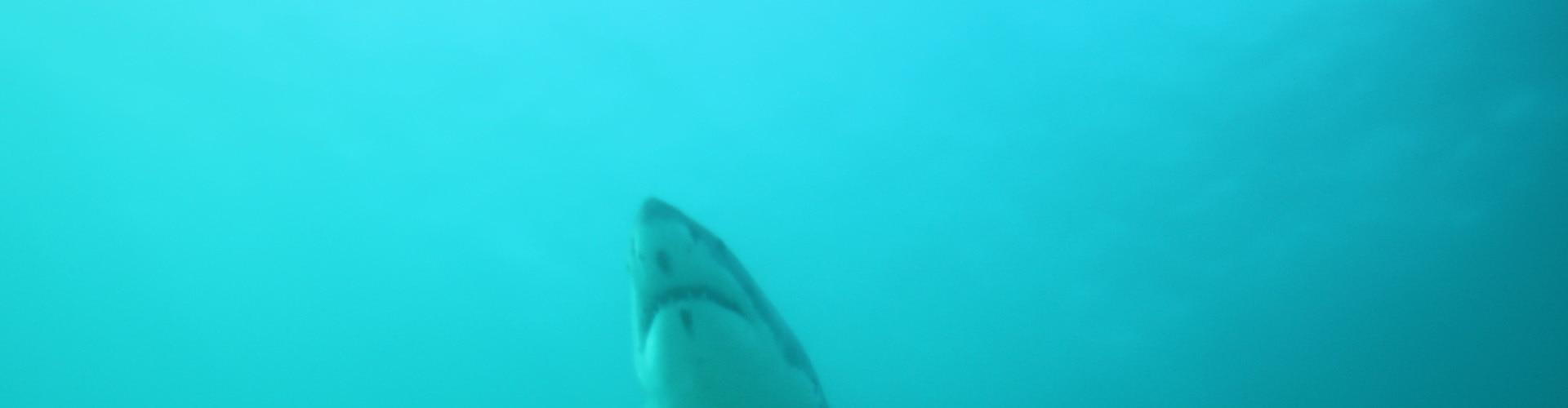 Watch African Shark Safari Online