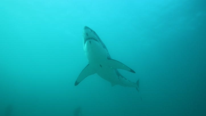 Watch African Shark Safari Online