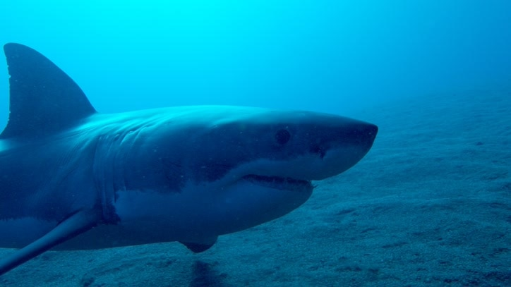 Watch Great White Abyss Online
