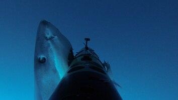 Shark Cam Strikes Back