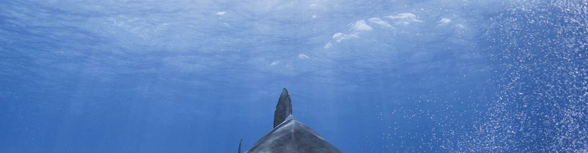 Watch 30 Years Of Shark And Awe Online