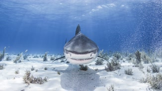 30 Years Of Shark And Awe image