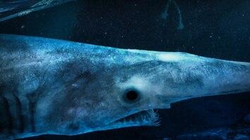 Alien Sharks: Close Encounters