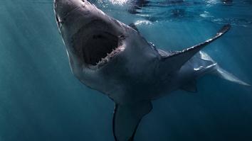 Sharks Gone Wild