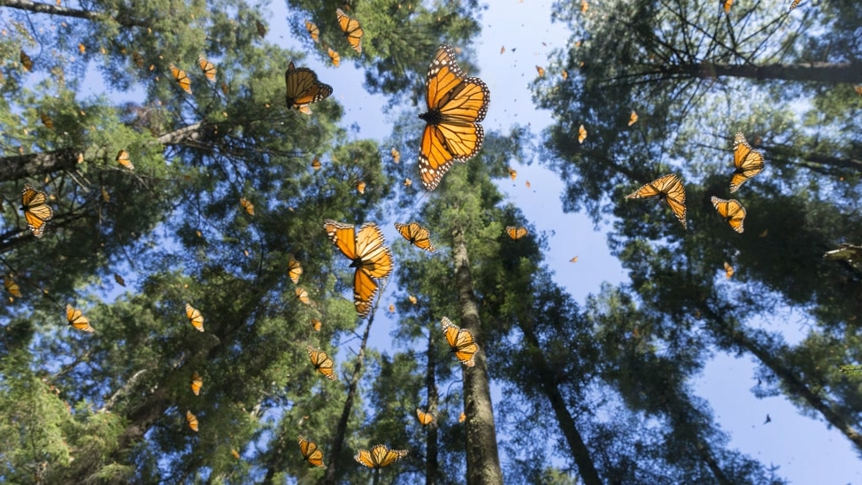 Episode 4 - Autumn: Flight Of The Butterflies