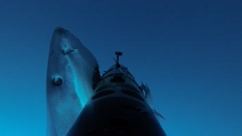 Shark Cam Strikes Back