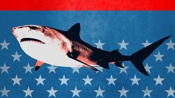 Tiger Shark King
