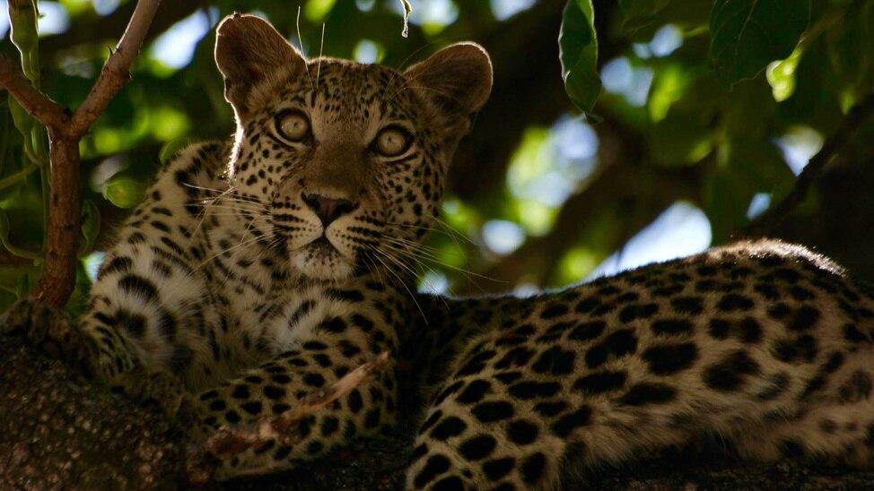 EPISODE 6 - Leopard Spotting