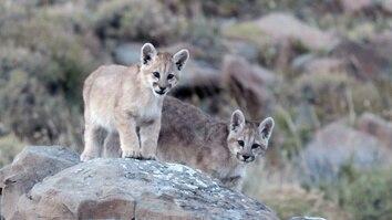 Man Vs Puma