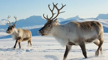 Siberia's Wild Year