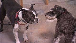 Dog Whisperer, The  14