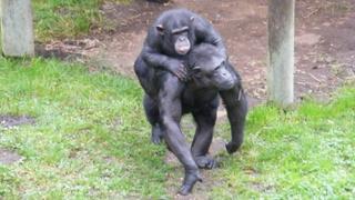 Monkey Life   1