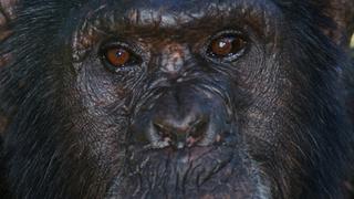 Monkey Life  13