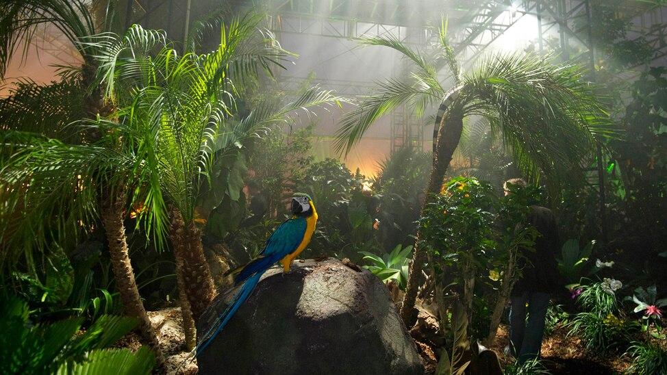 Episode 1 - Rooftop Rainforest   1
