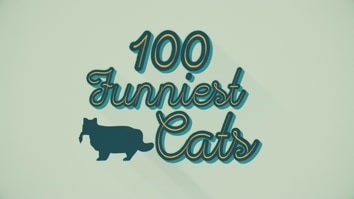 100 Funniest Cats Caught on Camera