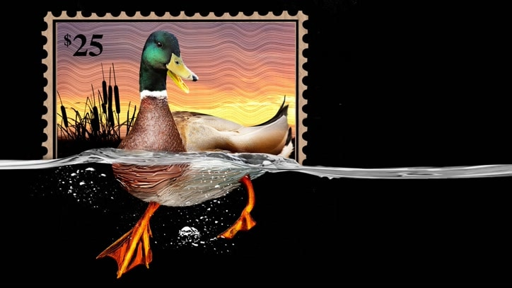 Watch The Million Dollar Duck Online