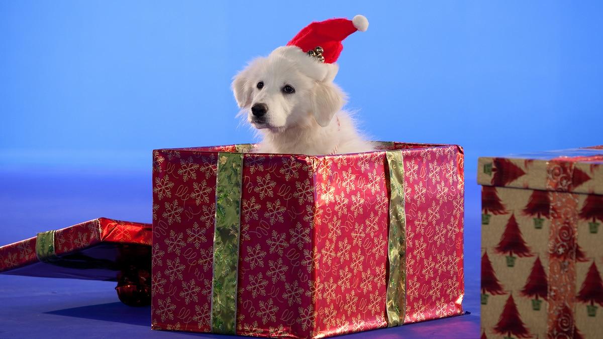 Santa Paws II: The Santa Pups