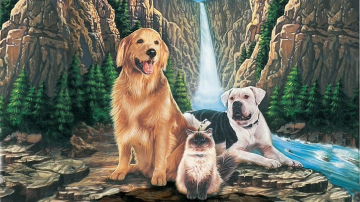 Watch Homeward Bound: The Incredible... Online