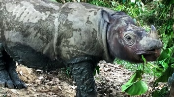 Operation Sumatran Rhino
