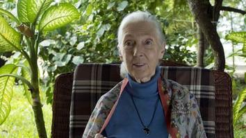 Jane Goodall: Saving Paradise