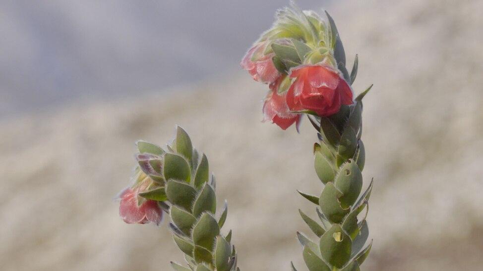 Episode 6 - Ngorongoro Crater - Cursed Heaven